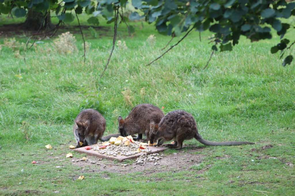 Hamerton Zoo Park