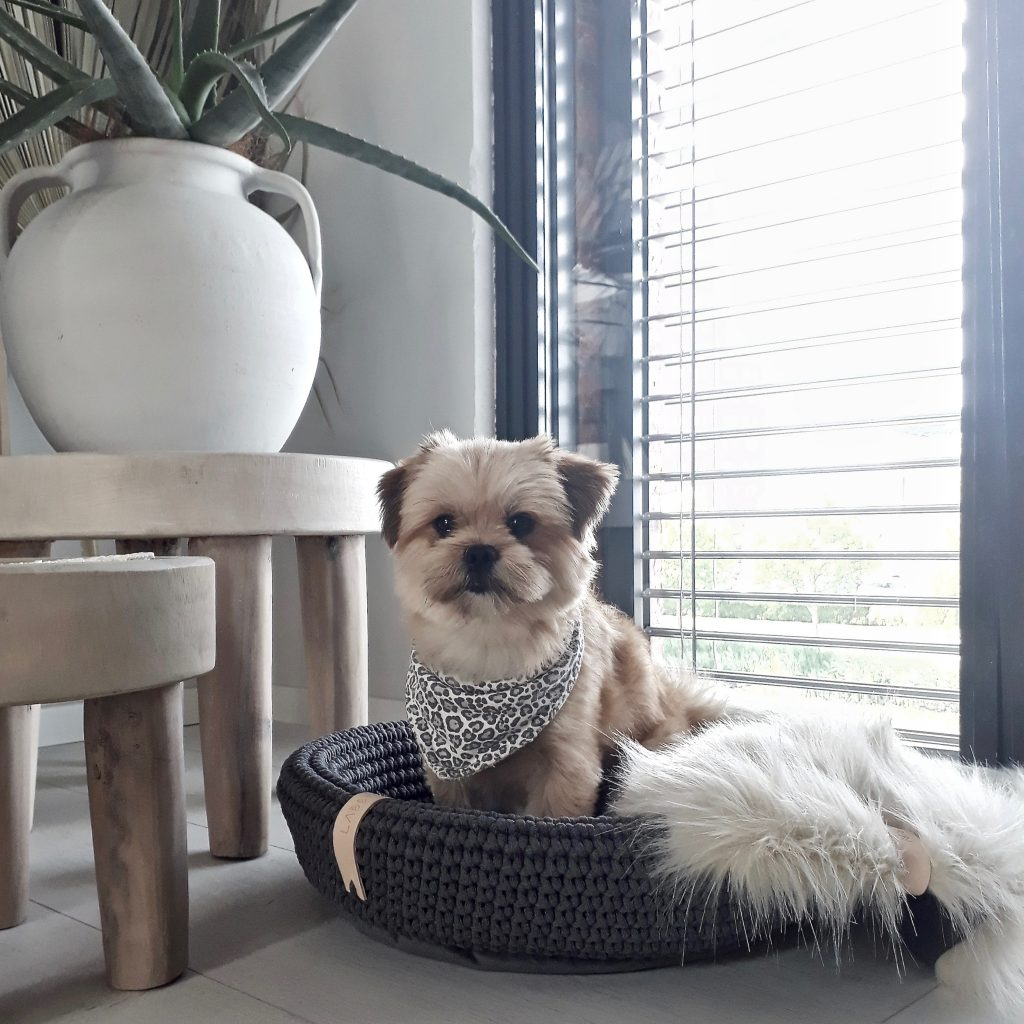 Our search for the most beautiful dog beds