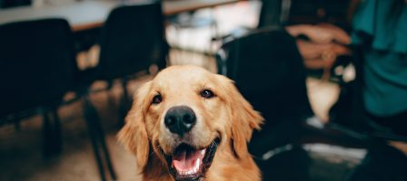 The Easiest Ways To Keep your Dog Happy