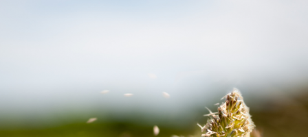 Keeping your allergies under control
